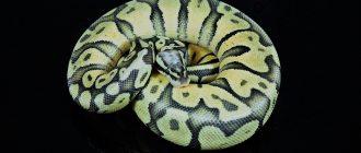 Цикл for в Python. Синтаксис, итерация по списку, break, continue и другие возможности