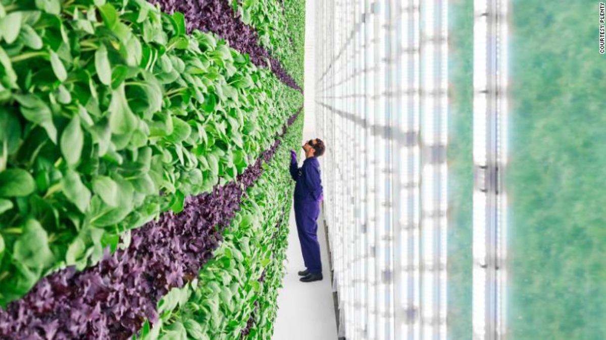 """Проект """"вертикальная ферма"""": как выращивают еду с помощью высоких технологий"""